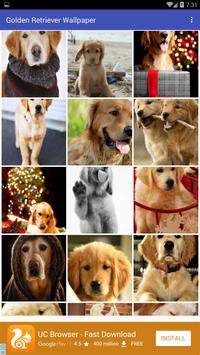 Golden Retriever Wallpaper poster