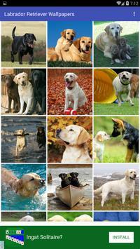 Labrador Retriever Wallpapers apk screenshot