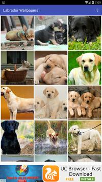 Labrador  Wallpapers poster