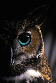 Cute owl wallpaper apk cute owl wallpaper apk voltagebd Image collections