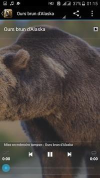 Bear Sounds apk screenshot