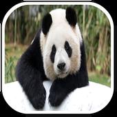 Panda Sounds icon