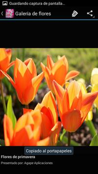 Flores de Primavera apk screenshot