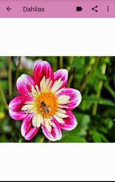 Flowers Images screenshot 3