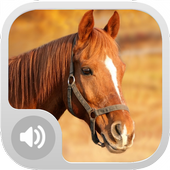 Horse Sounds! icon