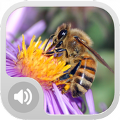 Bee Sounds! icon
