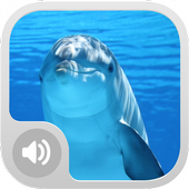 Real Dolphin Sounds icon
