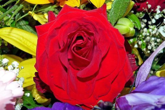 Rosas Rojas de Amor apk screenshot