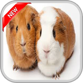 Hamster Walpaper icon