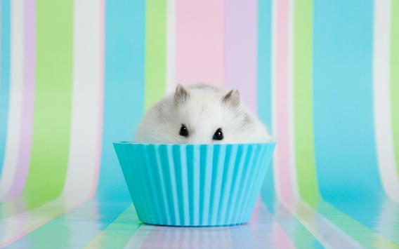 Hamster Walpaper poster