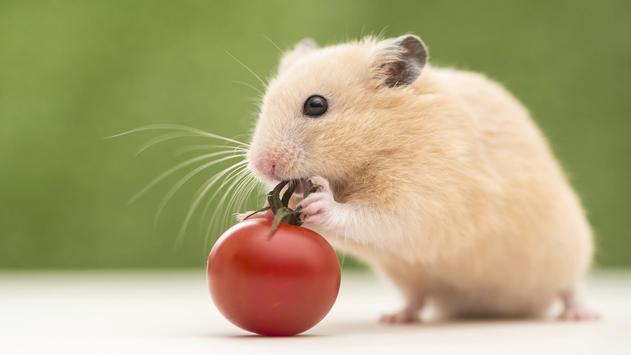 Hamster Walpaper screenshot 5
