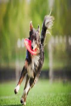 Dog tricks poster