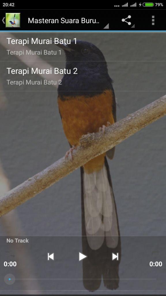 Suara Burung Murai Juara Mp3 For Android Apk Download