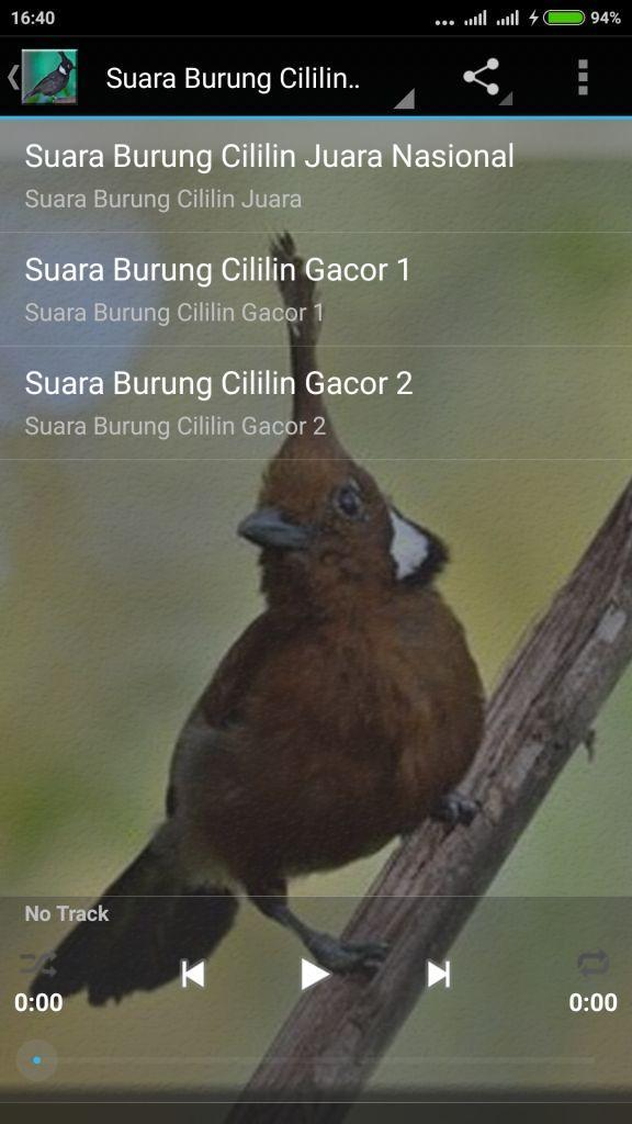 Suara Burung Cililin Master For Android Apk Download