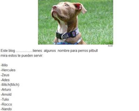 Nombres Para Perros Pitbull Para Android Apk Baixar