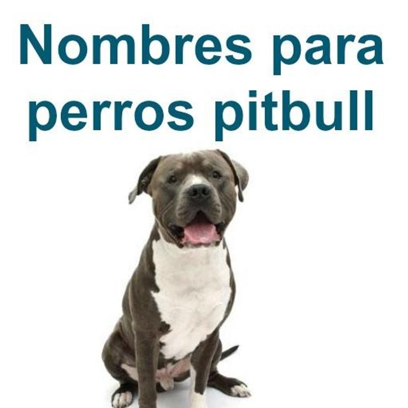 Nombres Para Perros Pitbull For Android Apk Download