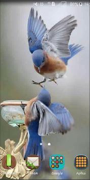 Bird Wallpaper screenshot 2