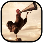 Wild Rooster Sounds icon