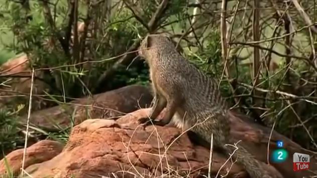 Documentales de animales screenshot 2