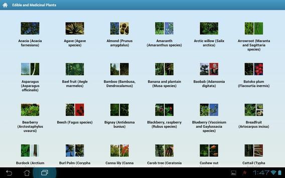 Edible and Medicinal Plants poster