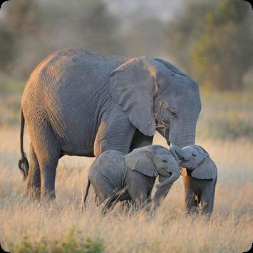Elephant Sounds poster