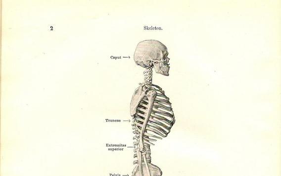 Anatomía humana Descarga APK - Gratis Entretenimiento Aplicación ...