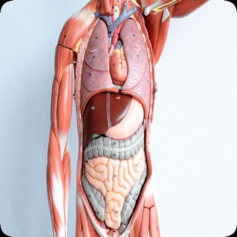 Anatomía humana Descarga APK - Gratis Educación Aplicación para ...