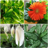 植物鑑定 圖標