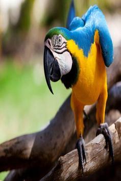 Parrot Sounds poster