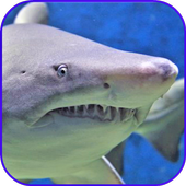 Sharks Wallpaper icon