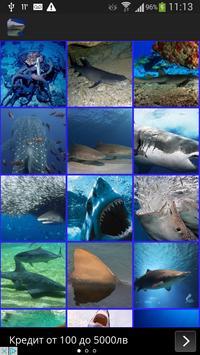 Sharks Wallpaper poster