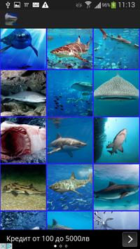 Sharks Wallpaper screenshot 1