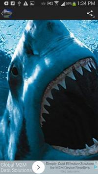 Sharks Wallpaper screenshot 2