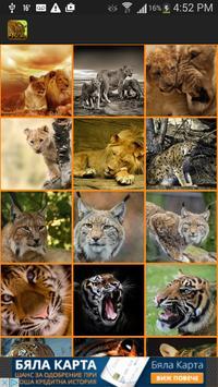 Wild Cats Wallpaper poster