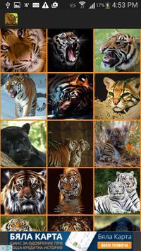 Wild Cats Wallpaper screenshot 1