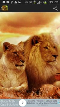 Wild Cats Wallpaper screenshot 4