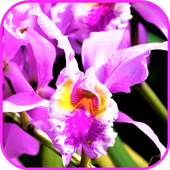 Exotic Tropical Flowers Wallpaper icon