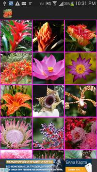 Exotic Tropical Flowers Wallpaper poster