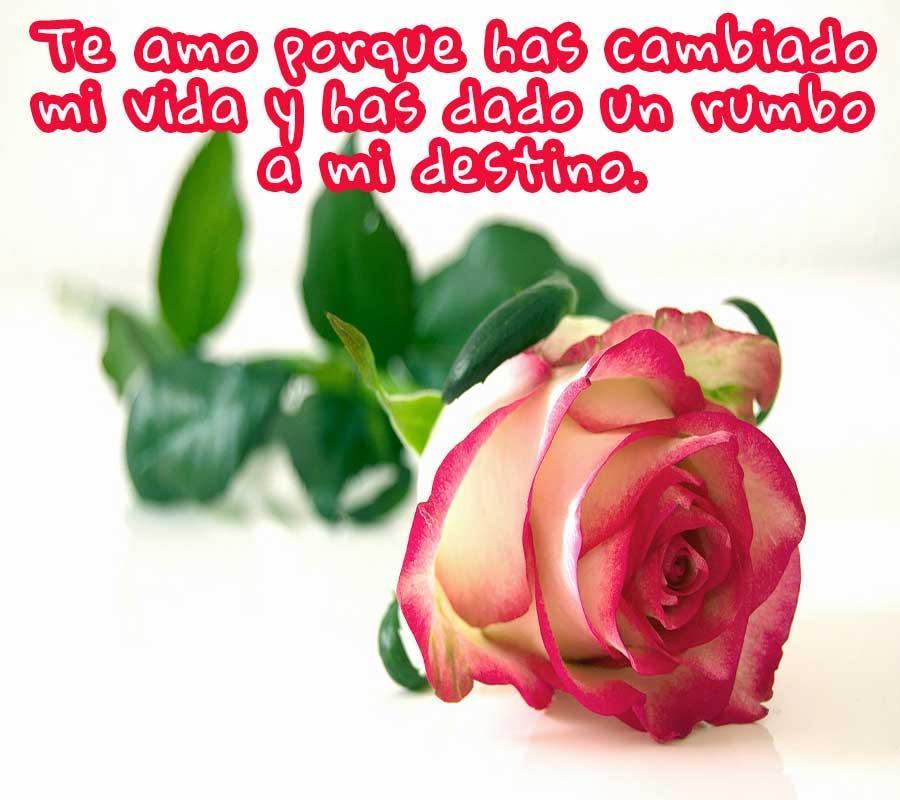 Frases De Amor Con Flores Für Android Apk Herunterladen