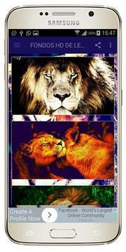 FONDOS HD DE LEONES screenshot 1