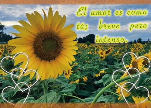 Frases de amor con girasoles screenshot 3