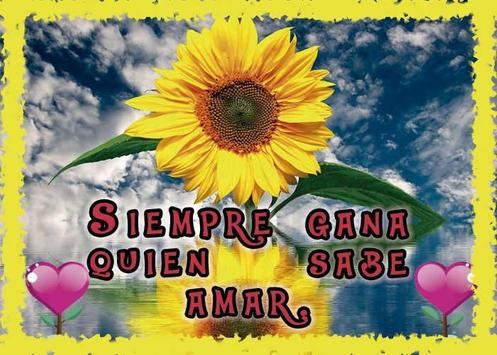 Frases de amor con girasoles screenshot 7