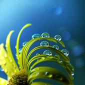 Fresh Flowers Background icon
