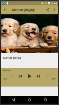 Dog Sounds screenshot 2