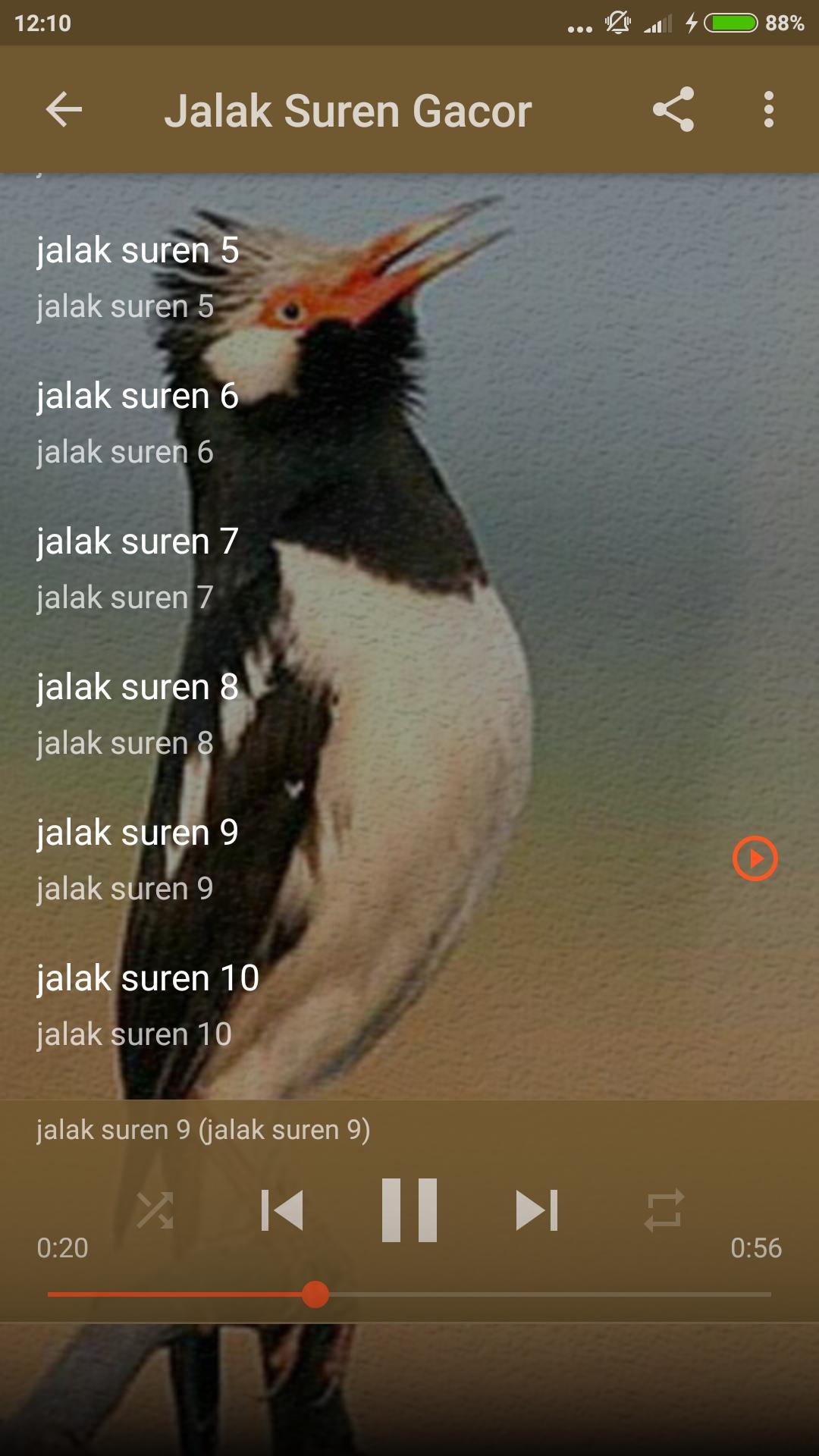 Suara Burung Jalak Suren Jawa For Android Apk Download