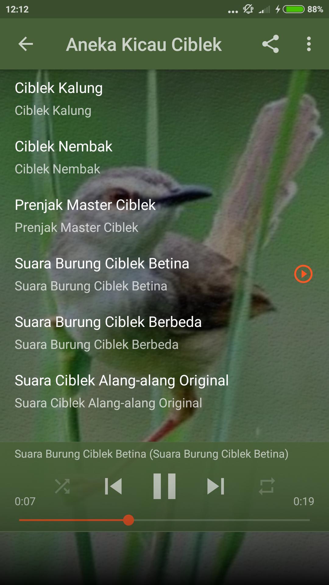 Kicau Burung Ciblek Untuk Pikat For Android Apk Download