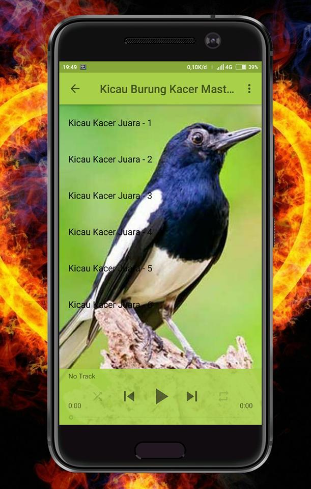 Kicau Burung Kacer Mp3 For Android Apk Download