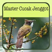 Master Cucak Jenggot icon