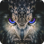 Night Owl Wallpaper icon