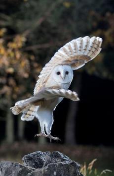 Night Owl Wallpaper screenshot 3